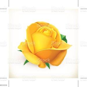 rose flower vector illustration yellow clip illustrations royalty graphics event cartoons