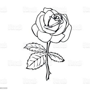 rose outline sketch vector illustration background clip flower tattoo illustrations vectors istockphoto graphics