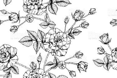 clip roses border floral rose vector illustrations flower drawing pattern background results