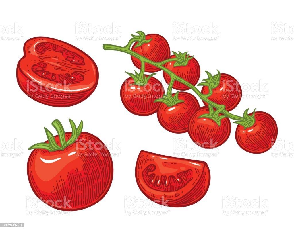 tomato plant illustrations