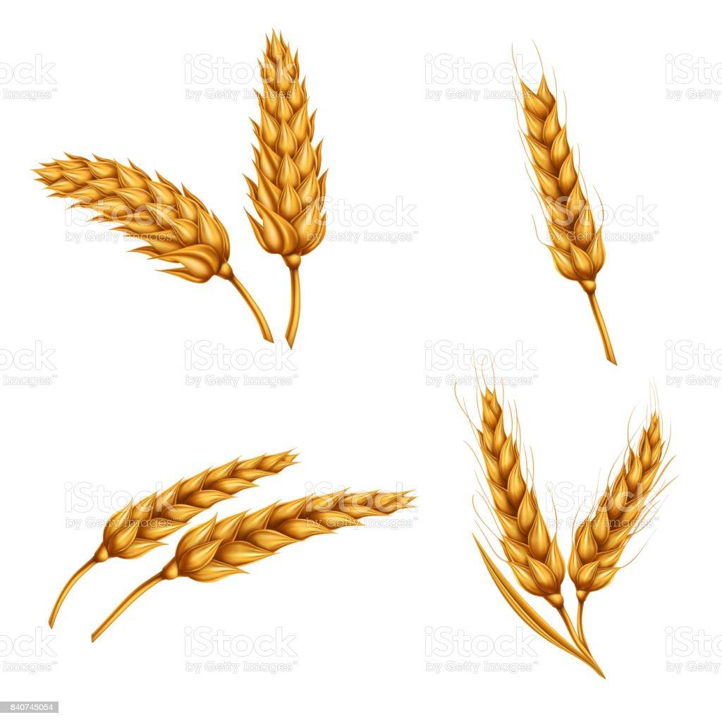 best wheat sheaf silhouette