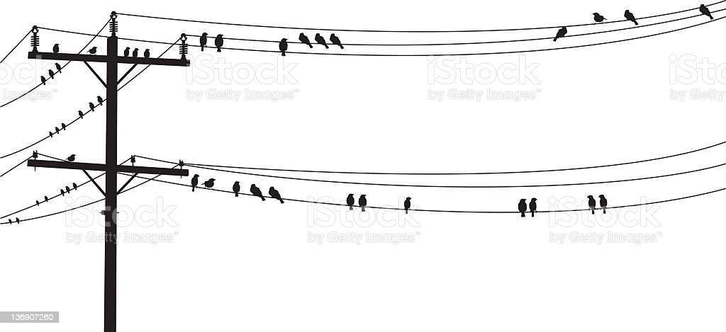 Several Bw Birds Perched On A Old Telephone Wire Stock
