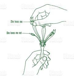 she loves me flower diagram royalty free she loves me flower diagram stock illustration  [ 904 x 1024 Pixel ]