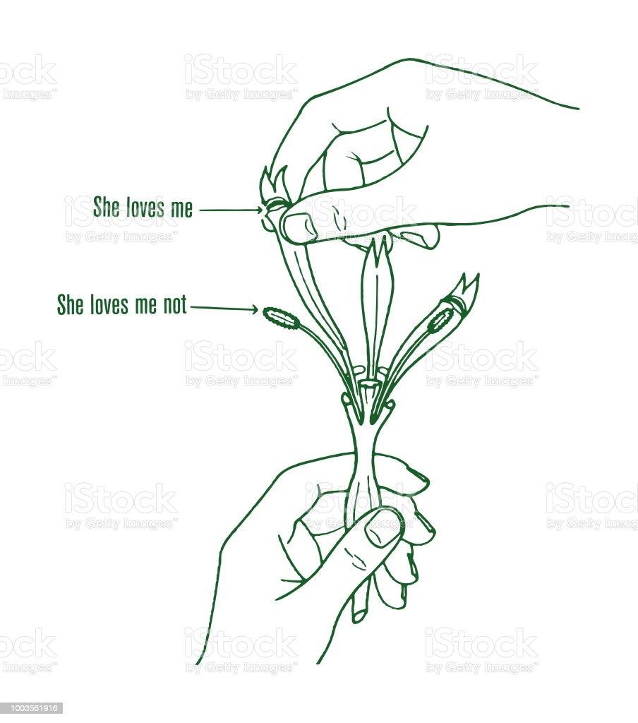 hight resolution of she loves me flower diagram royalty free she loves me flower diagram stock illustration