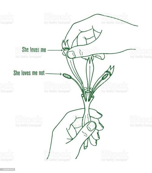 small resolution of she loves me flower diagram royalty free she loves me flower diagram stock illustration
