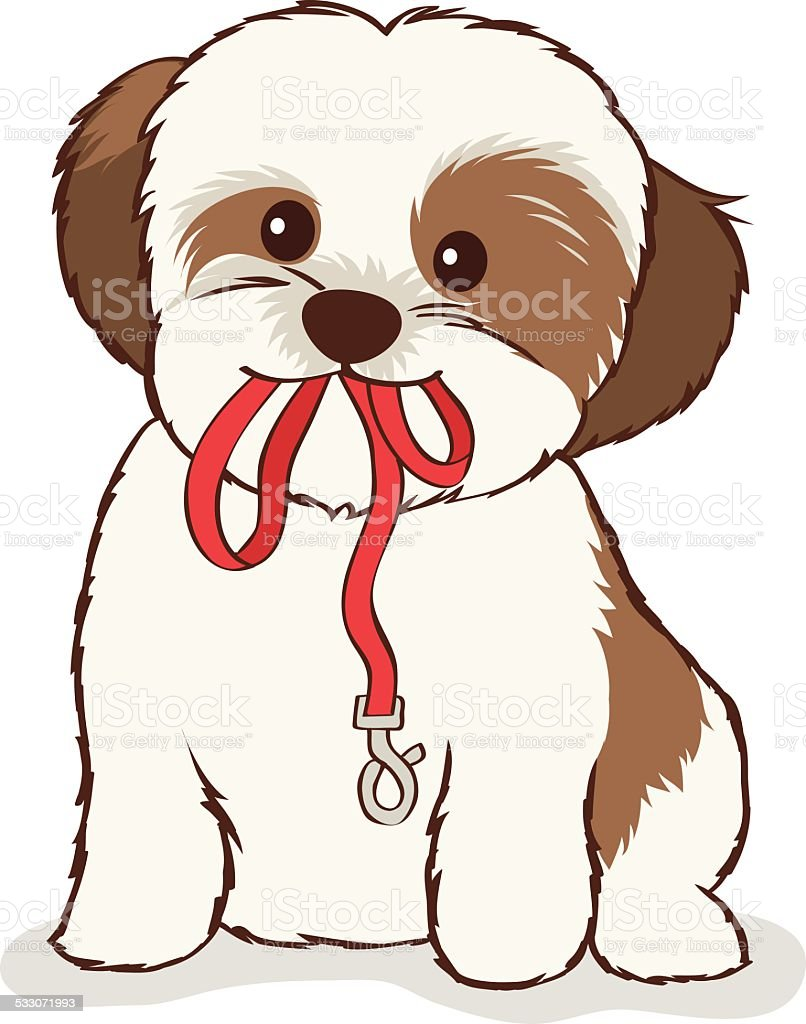 Shih Tzu Puppy With Leash In Mouth Stock Vector Art More