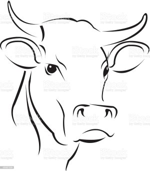 cow sketch drawing draw face simple easy drawings animal step vector animals painting head cows bull sketches paintings dairy pencil