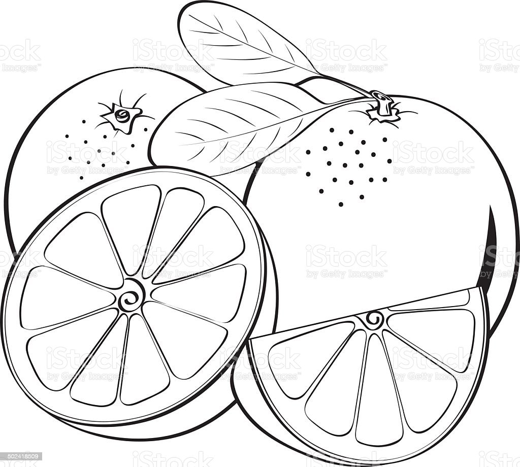 drawing of orange peel clip art