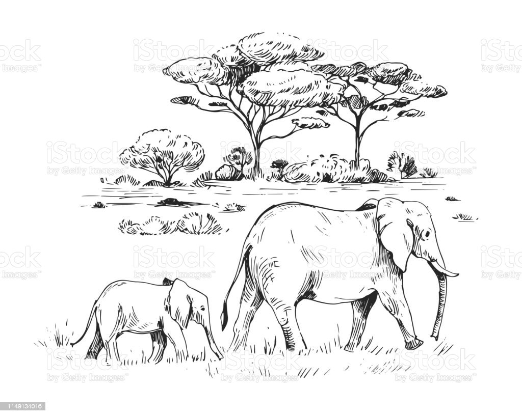 Sketch Of The African Savanna Hand Drawn Illustrtion