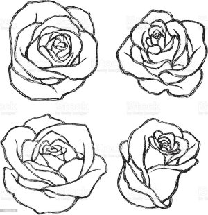 outline rose flower sketch drawing vector tattoo drawn hand illustration drawings istockphoto tattoos variations series lightbox clip flowers cut roses