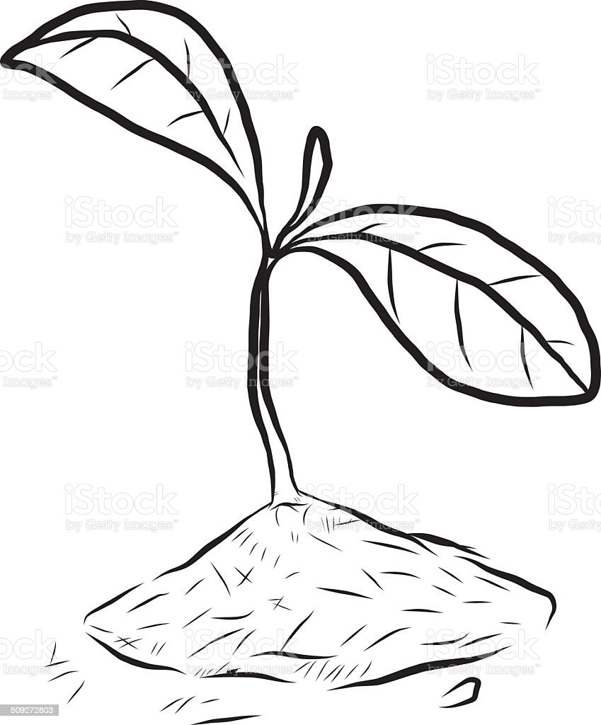 Small Plant Stock Vector Art & More Images of Agriculture