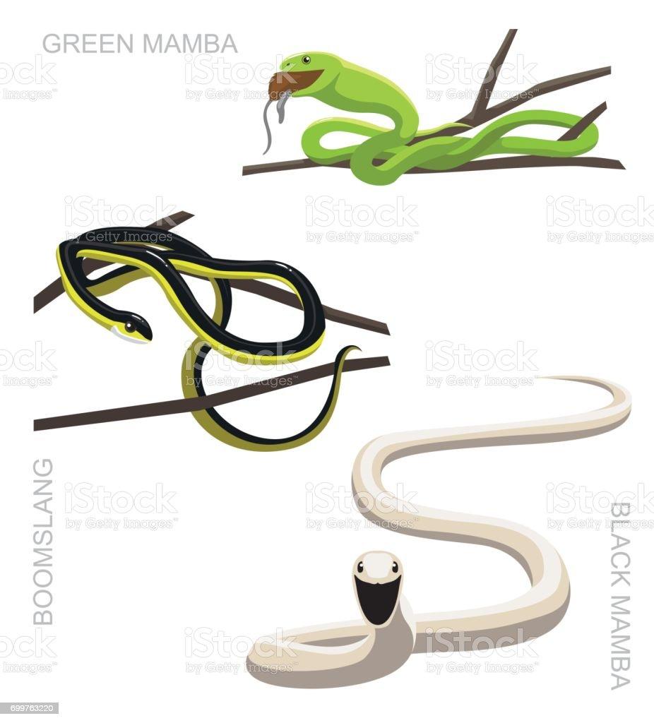 Snake Mamba Best Information Black