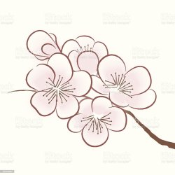 cherry blossom vector outline vectors file