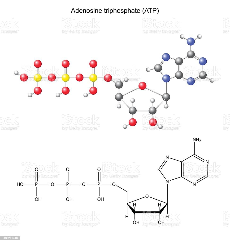 Structural Chemical Formula And Model Of Adenosine