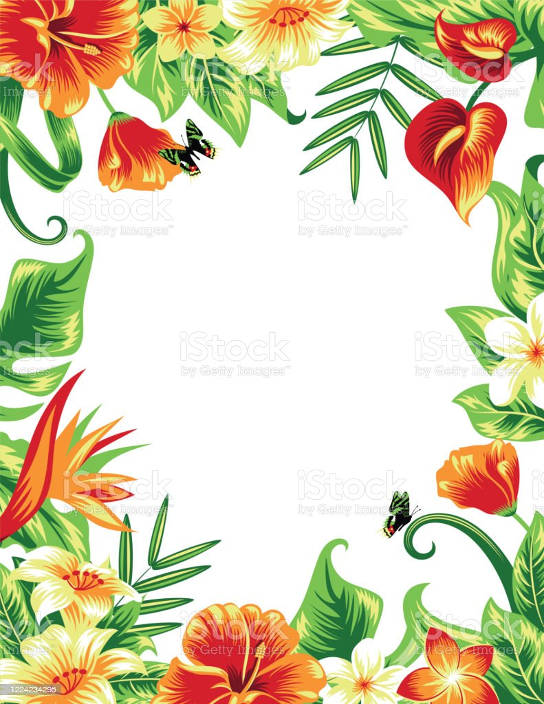 Summer Tropical Background : summer, tropical, background, Summer, Tropical, Background, Frame, Leaves, Hibiscus, Flowers, Stock, Illustration, Download, Image, IStock