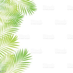 palm tree tropical leaves vector border frame summer natural poster card grunge rainforest plant abstract asia usa