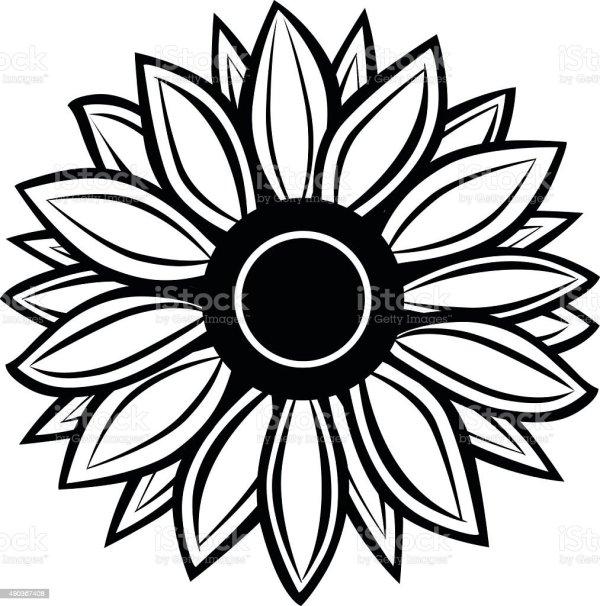 sunflower stock vector art &