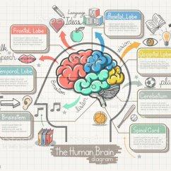 Brain Model Diagram Trane Voyager 3 Wiring The Human Doodles Icons Set Stock Vector Art