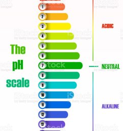 the ph scale diagram illustration  [ 791 x 1024 Pixel ]