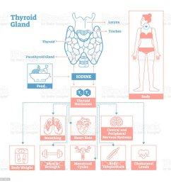 thyroid gland of endocrine system medical science vector illustration diagram royalty free thyroid [ 1024 x 1024 Pixel ]