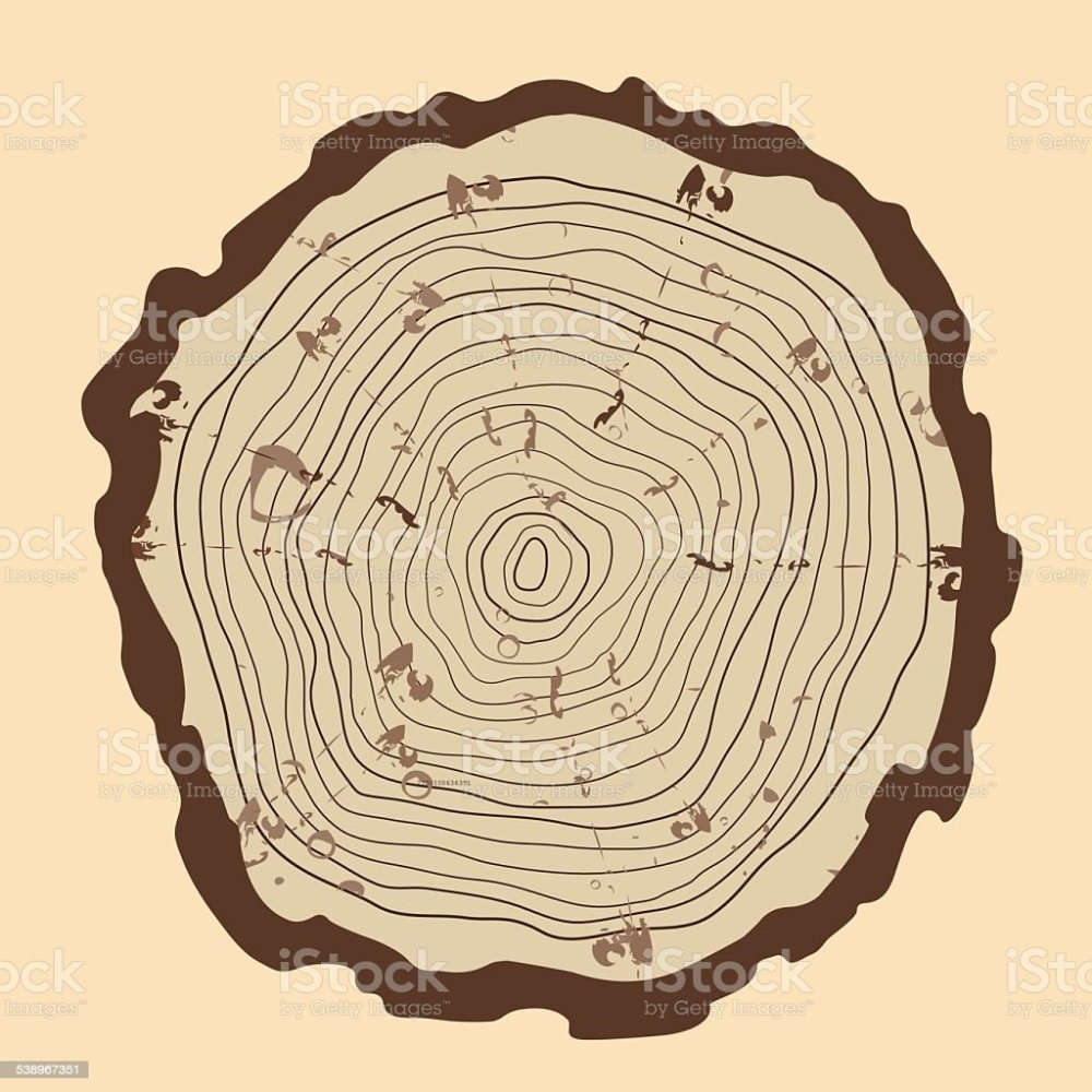 medium resolution of tree rings and saw cut tree trunk vintage style royalty free tree rings and