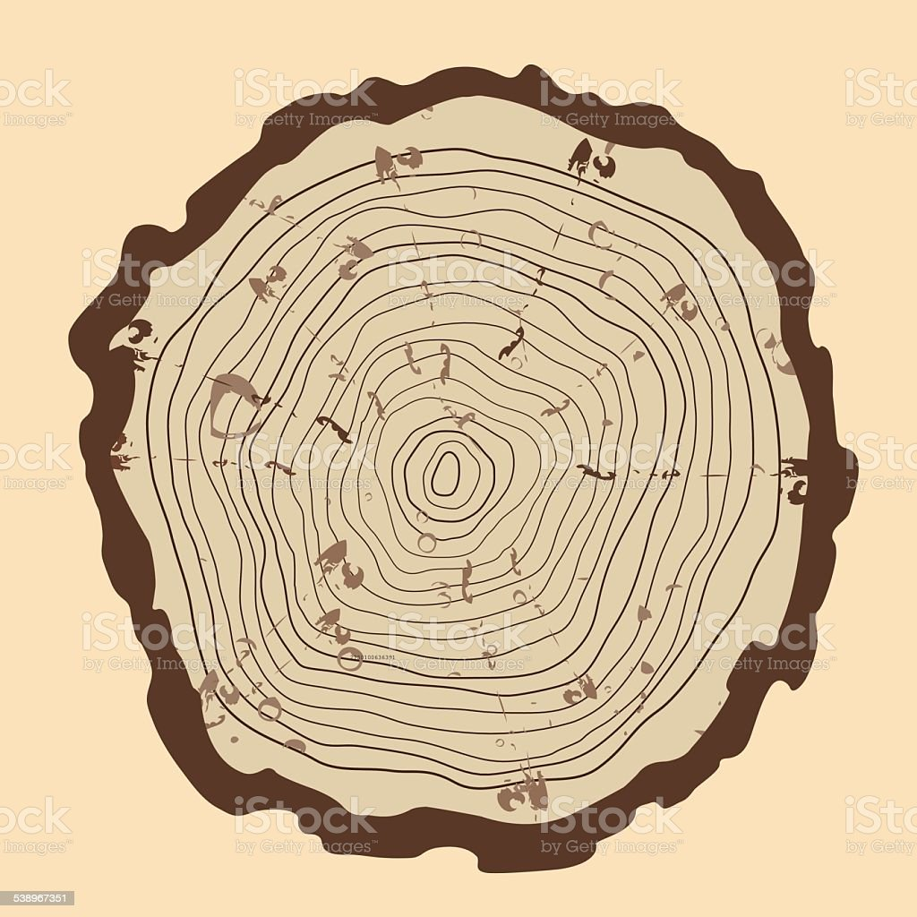hight resolution of tree rings and saw cut tree trunk vintage style royalty free tree rings and