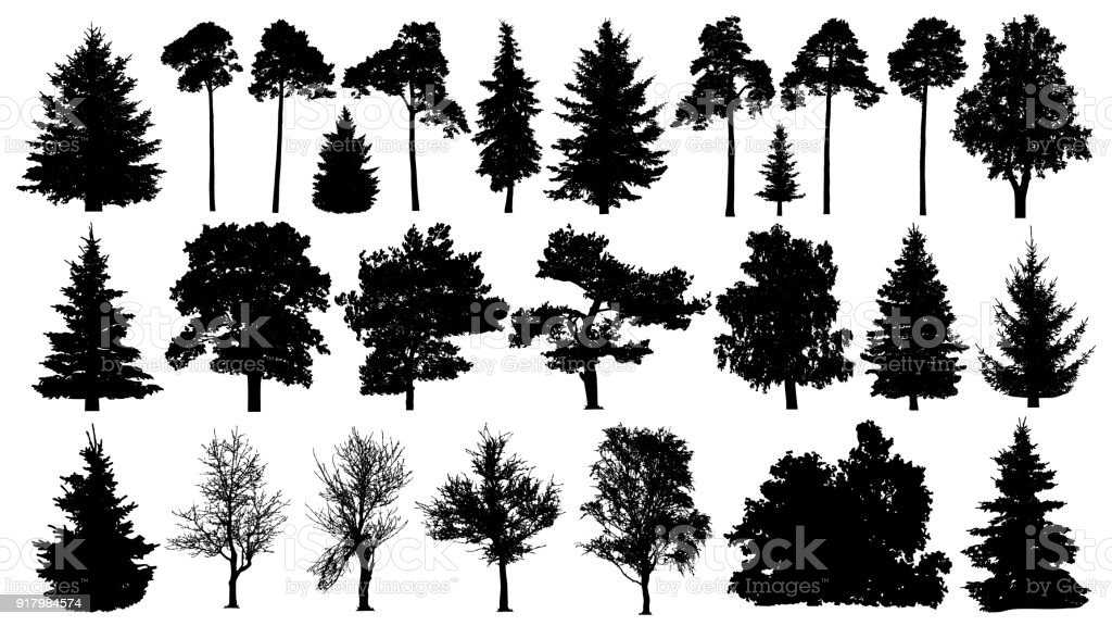 best tree illustrations royalty