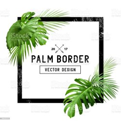 border palm tropical leaf vector backgrounds illustration culture entertainment arts vectors business