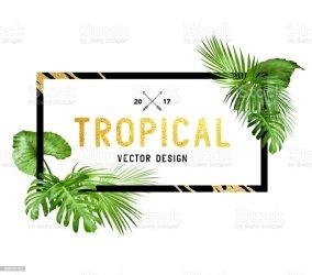 tropical border leaf palm vektor plam tropischen rahmendesign verschiedenen schwarz vector blaetter saeumen alamy