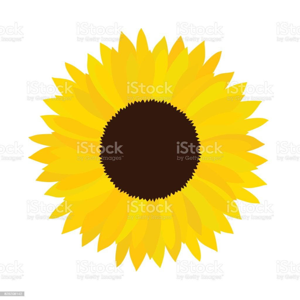 royalty free single sunflower clip