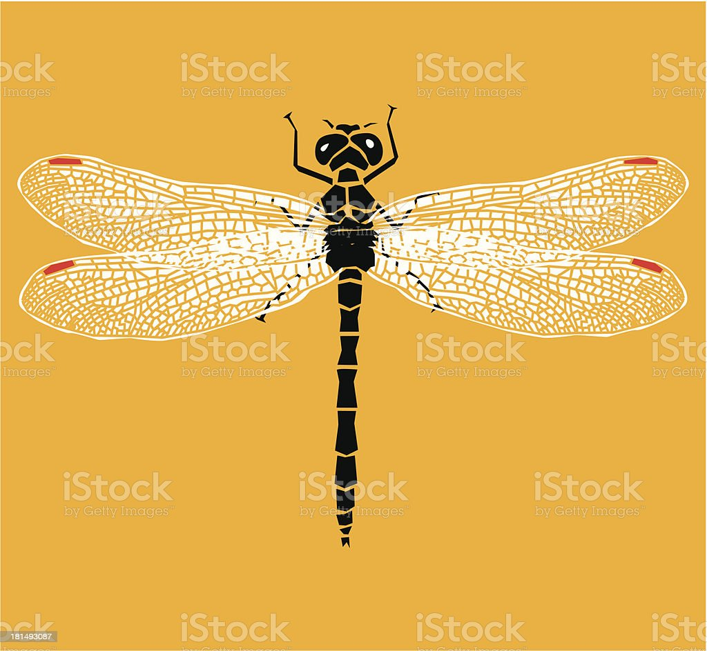 damselfly clip art vector