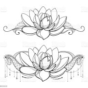 vector drawing with outline lotus
