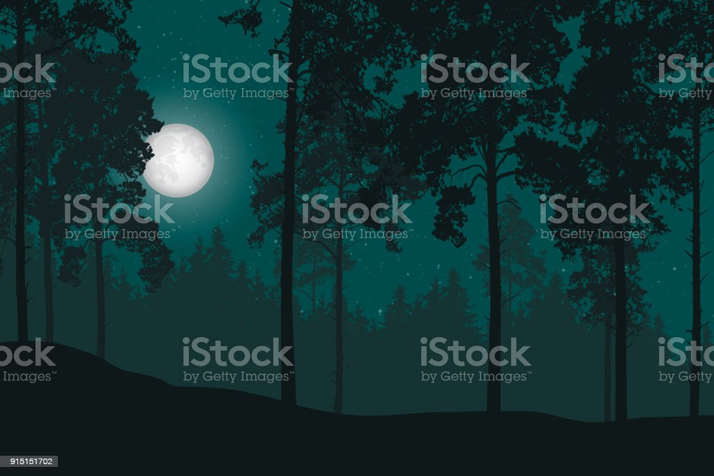 best night forest illustrations