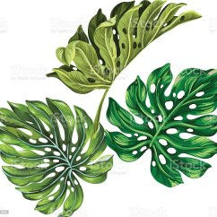 Plant Diagram Clip Art 2008 Nissan Frontier Radio Wiring Vector Illustration Of Tropical Leaves Stock