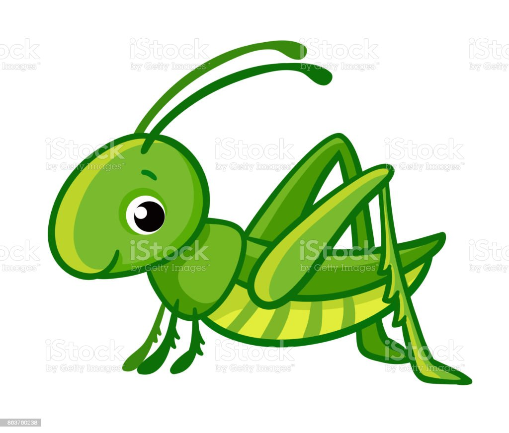 grasshopper illustrations