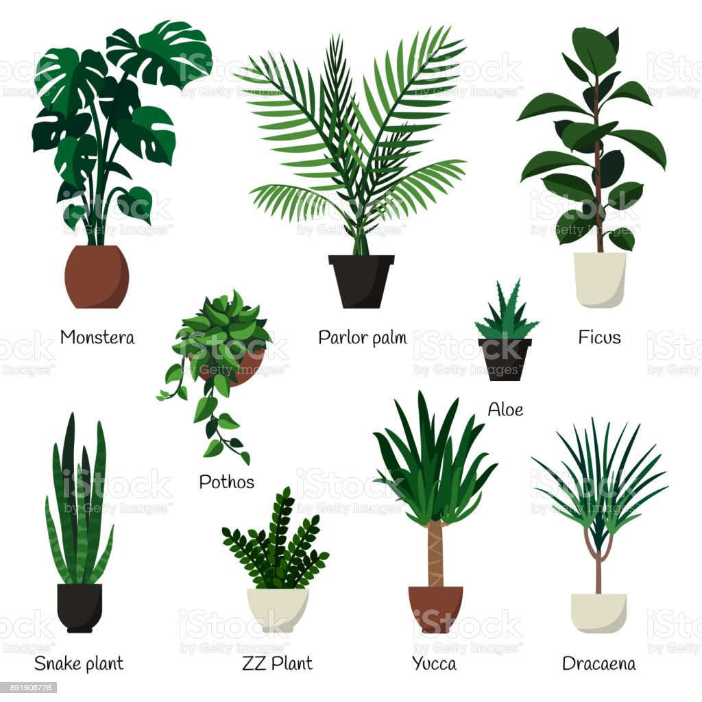 Vector Isolated Set Various Indoor Ornamental Plants With