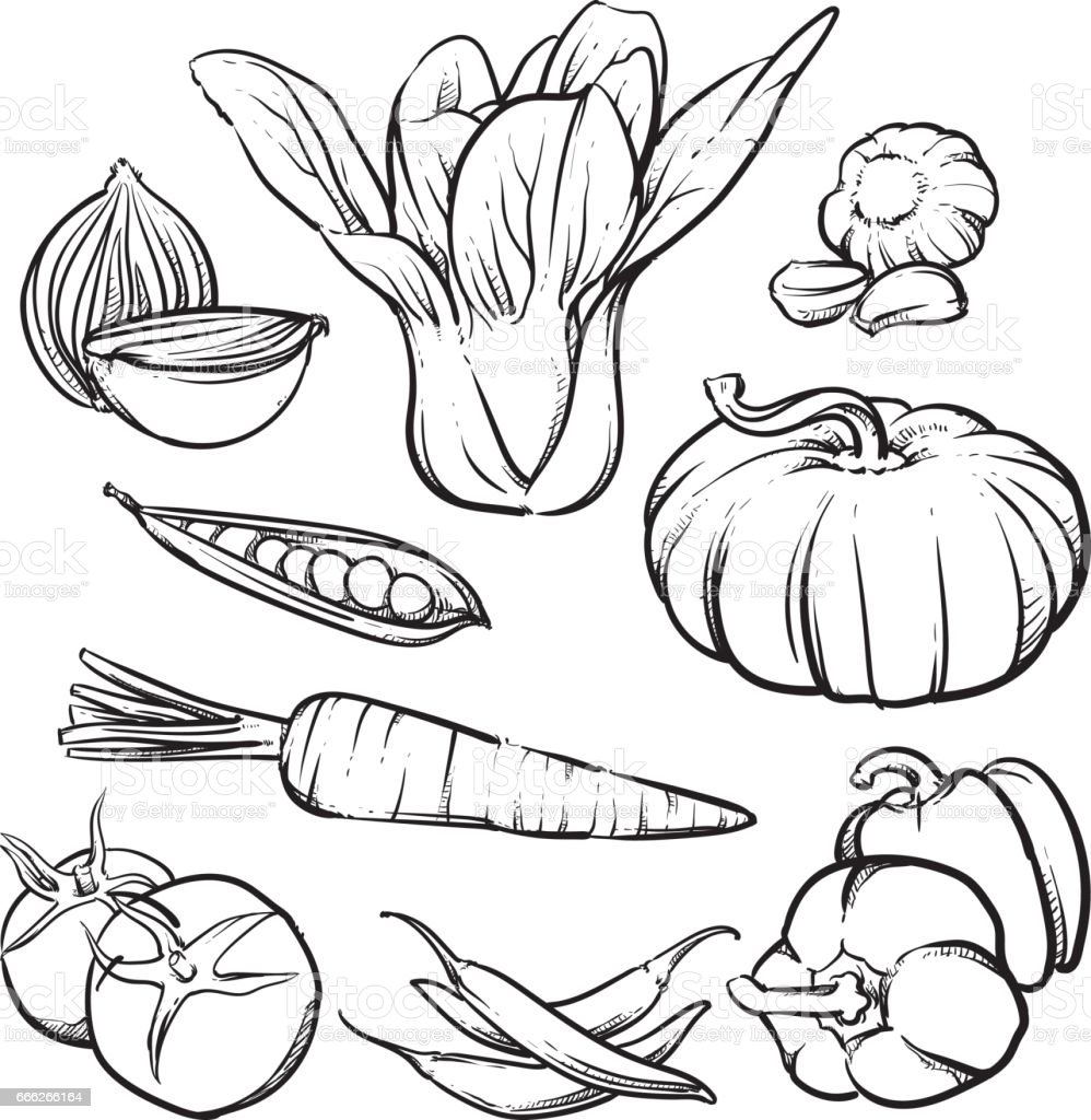 Vector Organic Vegetables Isolated On A White Background