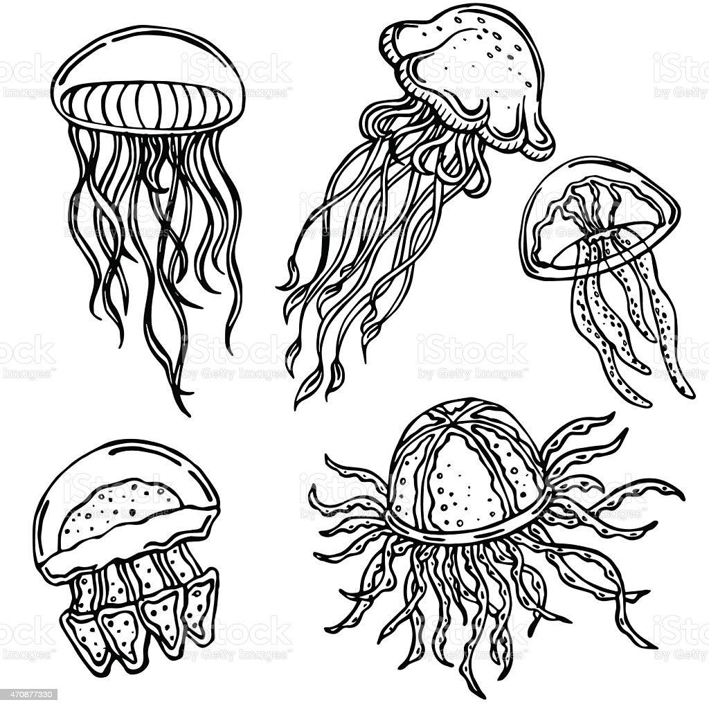 Vector Silhouette Of Various Jellyfish Stock Vector Art
