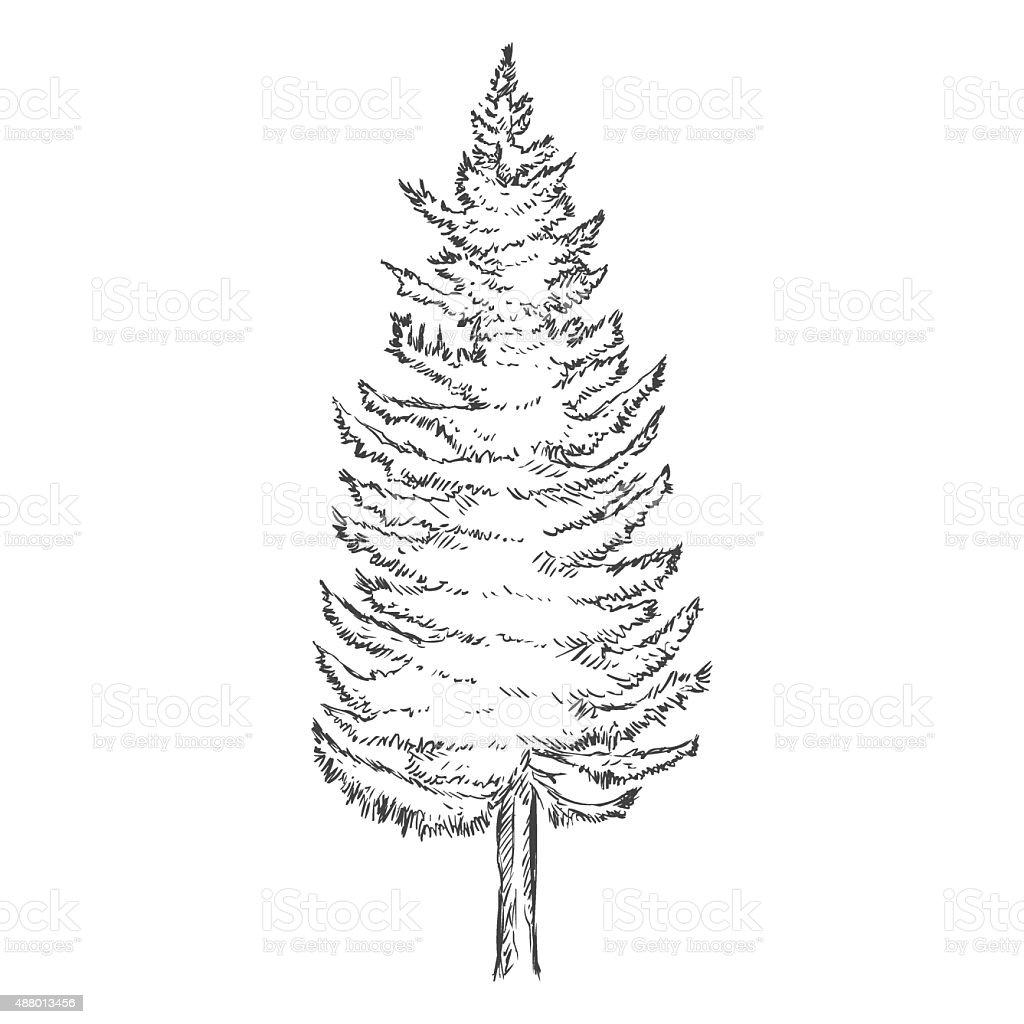Vector Single Sketch Pine Tree stock vector art 488013456
