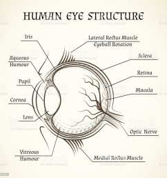 vector structure of the human eye royalty free vector structure of the human eye stock [ 1024 x 1024 Pixel ]