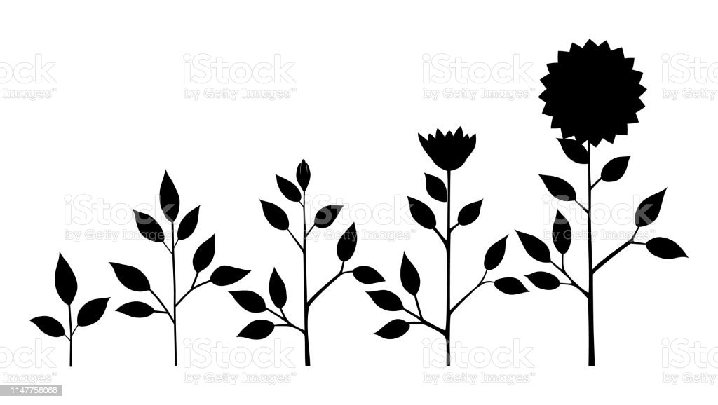 Vector Sunflower Plant Growth Stages Silhouette Abstract