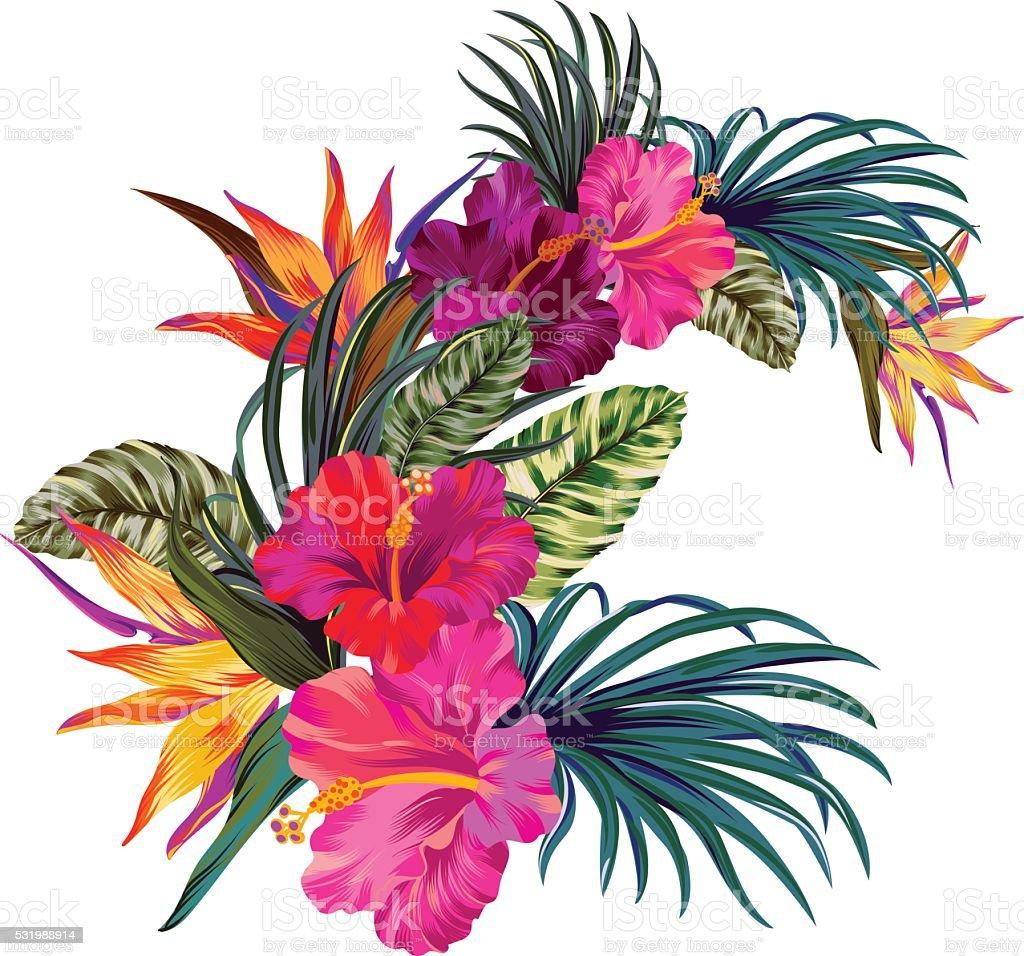 tropical flower illustrations