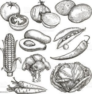 vegetables drawing sketches hand vector illustration background agriculture avocado cabbage broccoli istockphoto istock