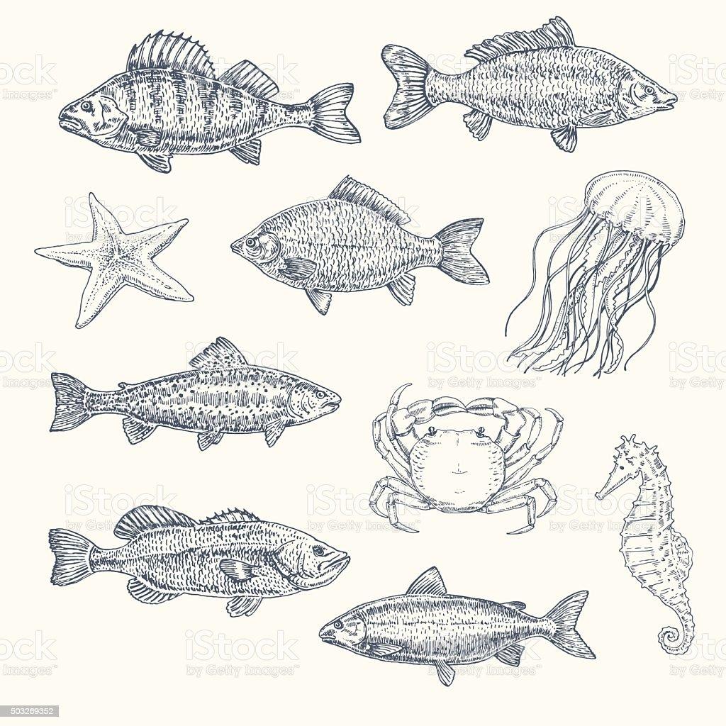 Vintage Set Of Sea Creatures Hand Drawn Illustration