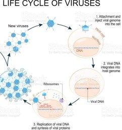 virus replication cycle royalty free virus replication cycle stock vector art amp more images [ 1024 x 834 Pixel ]