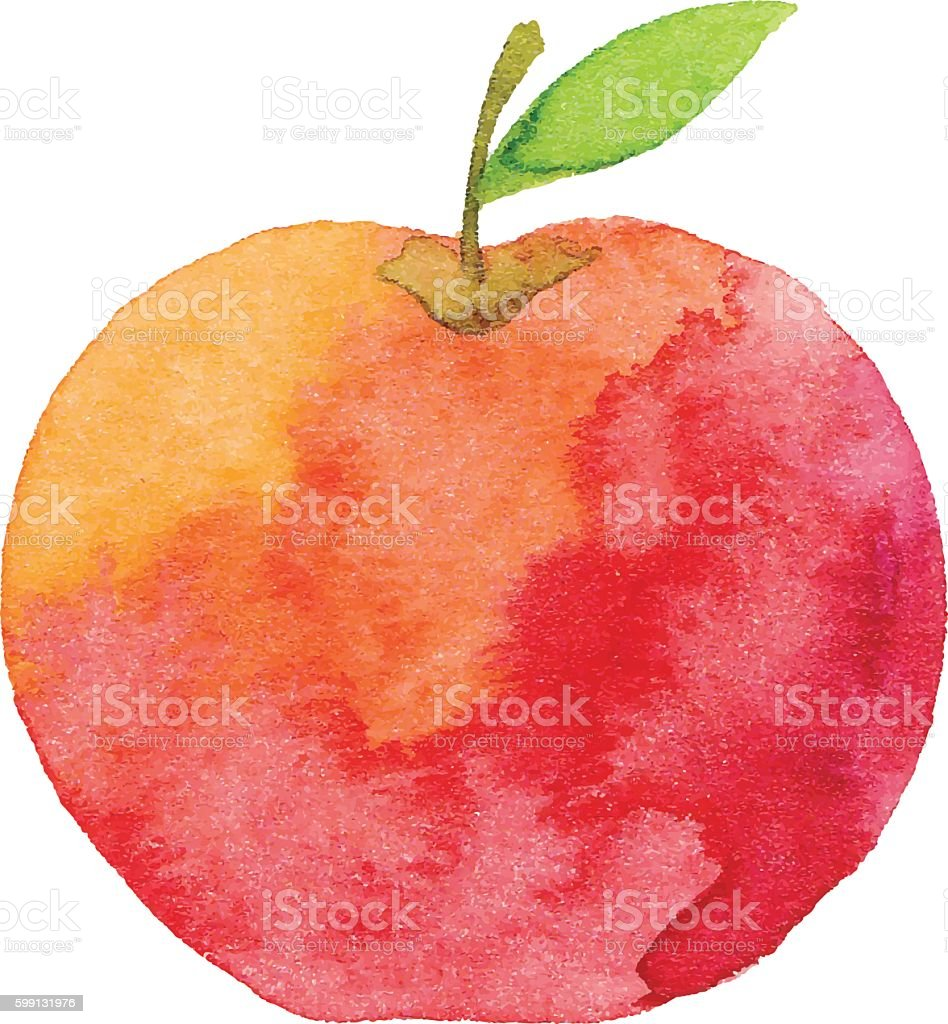 apple illustrations royalty-free