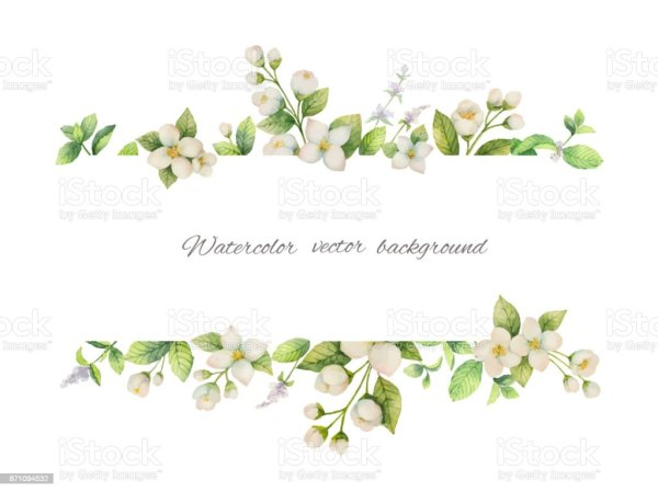 Watercolor Vector Banner Of Flowers Jasmine And Mint