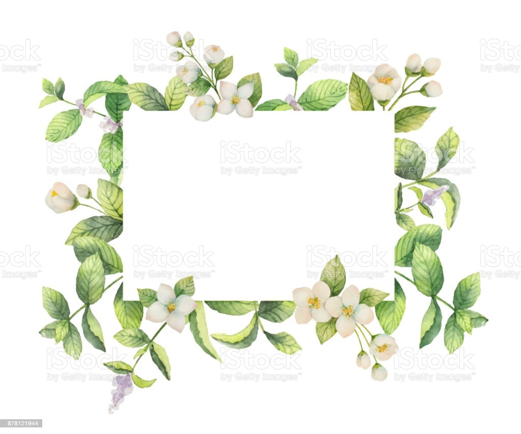 Watercolor Vector Frame Of Jasmine And Mint Branches