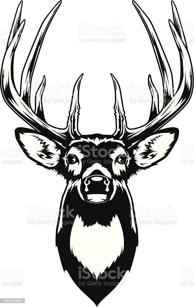 Buck Deer Clipart : clipart, White, Tailed, Illustrations, IStock