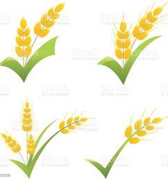 whole wheat grain symbol on green check clipart icons royalty free whole wheat grain symbol [ 1011 x 1024 Pixel ]